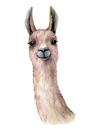 Watercolor card with llama. Hand painted beautiful illustration with animal isolated on white background. For design, print, fabric or background. Stock Photo
