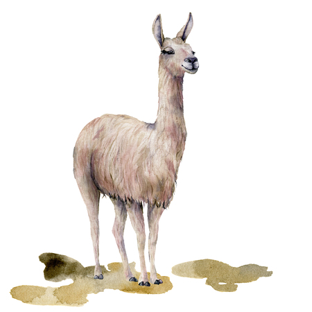 Watercolor card with llama on the ground. Hand painted beautiful illustration with animal isolated on white background. For design, print, fabric or background. Stock Photo