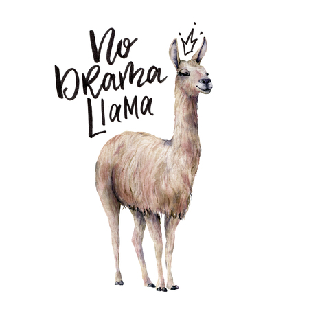 Watercolor No drama llama card with llama. Hand painted beautiful illustration with smiling animal and lettering isolated on white background. For design, print, fabric or background.
