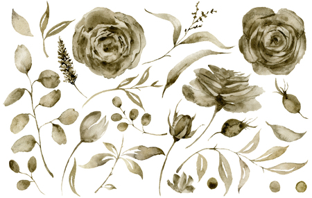Watercolor sepia rose set. Hand painted flowers and berries with eucalyptus leaves and branch isolated on white background for design, print or fabric.