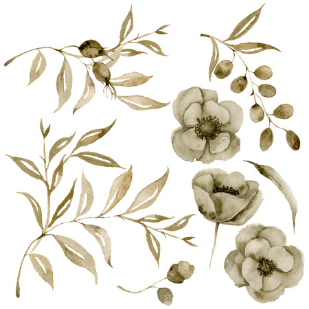 Watercolor sepia anemone and leaves bouquet set. Hand painted flowers and berries with eucalyptus leaves and branch isolated on white background for design, print or fabric. Stock Photo
