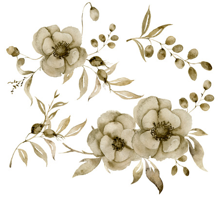 Watercolor monochrome anemone and berries bouquet set. Hand painted sepia flowers and berries with eucalyptus leaves and branch isolated on white background for design, print or fabric. Stock Photo