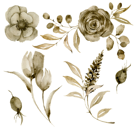 Watercolor sepia anemone and lavender bouquet set. Hand painted flowers and berries with eucalyptus leaves and branch isolated on white background for design, print or fabric.