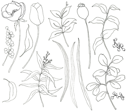 Collection of hand drawn plants with greenery and flowers. Botanical set of sketch flowers and branches with eucalyptus leaves isolated on white background for design, print or fabric. Stock Photo
