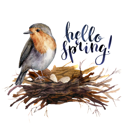 Watercolor lettering Hello spring bird card. Hand painted illustration with robin in the nest isolated on white background. Illustration for design, print, background.
