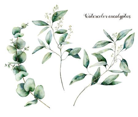 Ensemble d'eucalyptus ensemencé à l'aquarelle. Branche d'eucalyptus peinte à la main et feuilles isolées sur fond blanc. Illustration florale pour la conception, l'impression, le tissu ou l'arrière-plan. Banque d'images