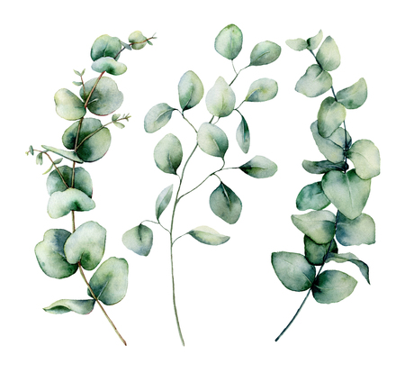 Watercolor silver dollar eucalyptus set. Hand painted baby, seeded and silver dollar eucalyptus branch isolated on white background. Floral illustration for design, print, fabric or background. Stock Photo