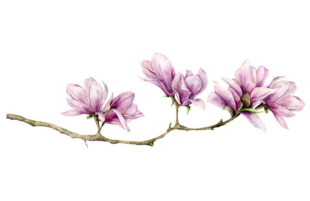 Watercolor magnolia horizontal card. Hand painted flowers on branch isolated on white background. Floral elegant illustration for design, print.
