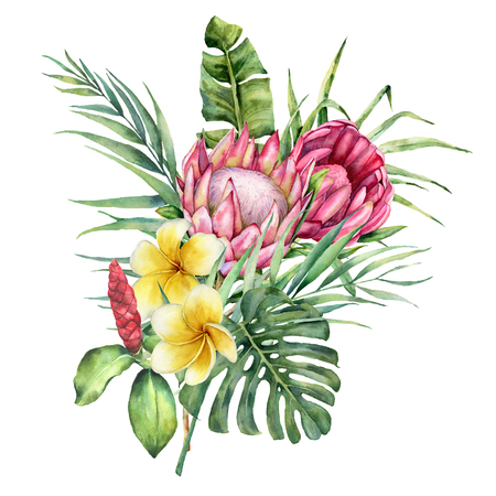 Watercolor bouquet with tropical flowers. Hand painted protea, plumeria and palm leaves isolated on white background. Nature botanical illustration for design, print. Realistic delicate plant. Stock Photo