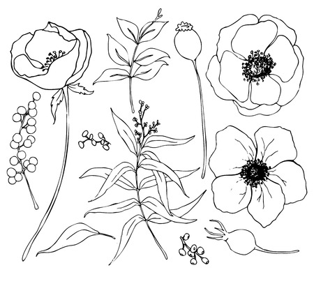 Vector collection of hand drawn plants with eucalyptus and anemone. Botanical set of sketch flowers and branches with eucalyptus leaves isolated on white background for design, print or fabric Vector Illustratie