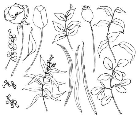 Vector collection of hand drawn plants with greenery and flowers. Botanical set of sketch flowers and branches with eucalyptus leaves isolated on white background for design, print or fabric