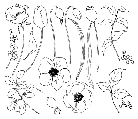 Vector collection of hand drawn plants with flowers. Botanical set of sketch flowers and branches with eucalyptus leaves isolated on white background for design, print or fabric