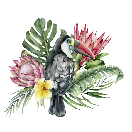 Watercolor tropical toucan and flowers bouquet. Hand painted bird, protea and plumeria isolated on white background. Nature botanical illustration for design, print. Realistic delicate plant.