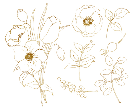 Vector golden sketch anemone and tulip big set. Hand painted flowers, eucalyptus leaves, berries and branch isolated on white background for design, print or fabric.