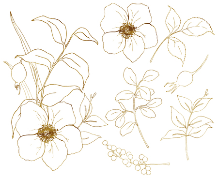 Vector golden sketch anemone set. Hand painted flowers, eucalyptus leaves, berries and branch isolated on white background for design, print or fabric.