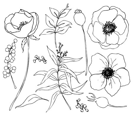 Vector collection of hand drawn plants with eucalyptus and anemone. Botanical set of sketch flowers and branches with eucalyptus leaves isolated on white background for design, print or fabric Illustration