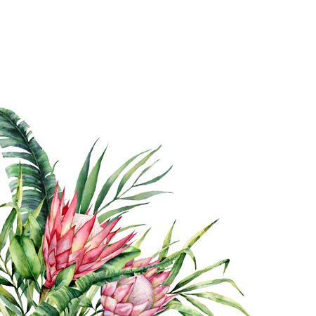 Watercolor tropical flowers and leaves card. Hand painted protea and palm leaves isolated on white background. Nature botanical illustration for design, print. Realistic delicate plant. Stock Photo