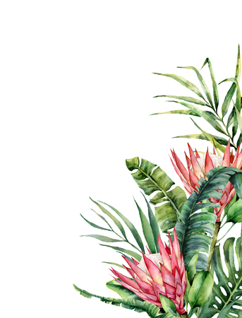 Watercolor tropical flowers and palm leaves card. Hand painted protea and leaves isolated on white background. Nature botanical illustration for design, print. Realistic delicate plant.