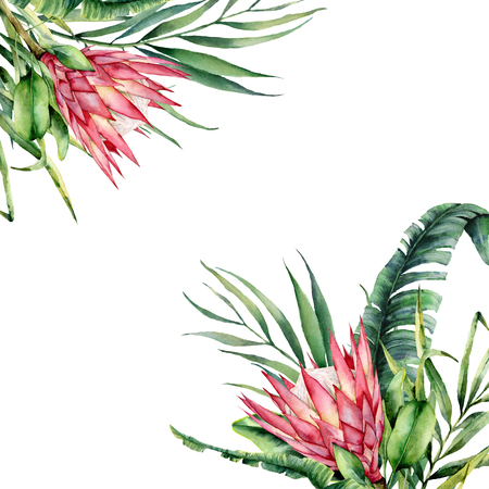 Watercolor tropical flowers card. Hand painted protea and palm leaves isolated on white background. Nature botanical illustration for design, print. Realistic delicate plant. Stock Photo