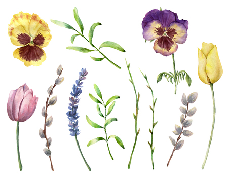 Watercolor spring plants set. Hand painted pansy, willow, lavender, tulips and herbs isolated on white background. Nature botanical illustration for design, print. Realistic delicate plant.