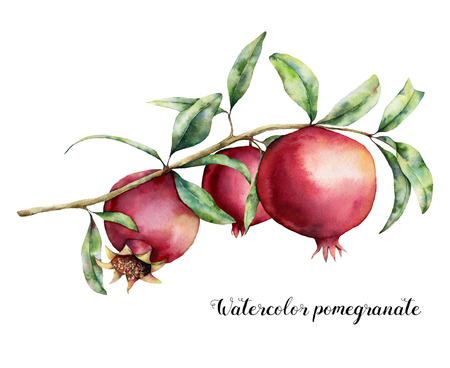 Watercolor pomegranate card. Hand painted garnet fruit on branch with leaves isolated on white background. Floral elegant illustration for design, print.
