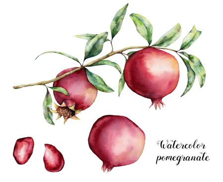 Watercolor pomegranate with berries set. Hand painted garnet fruit on branch with leaves isolated on white background. Floral elegant illustration for design, print.