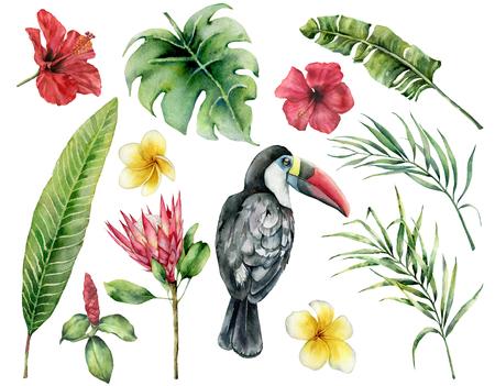 Acuarela hojas tropicales y tucán. Hibisco pintado a mano, plumeria, monstera, protea aislado sobre fondo blanco. Ilustración botánica de la naturaleza para el diseño, impresión. Planta delicada realista. Foto de archivo