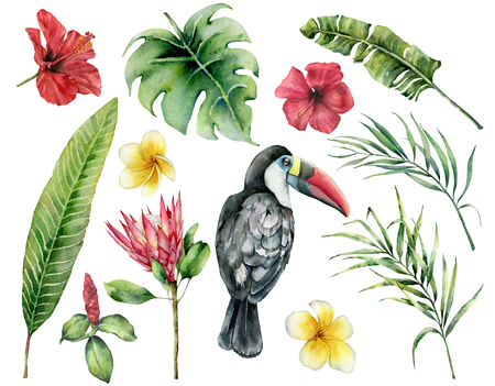 Watercolor tropical leaves and toucan set. Hand painted hibiscus, plumeria, monstera, protea isolated on white background. Nature botanical illustration for design, print. Realistic delicate plant.