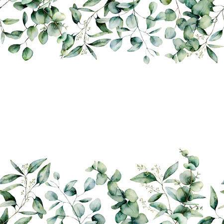 Watercolor different eucalyptus seamless border. Hand painted eucalyptus branch and leaves isolated on white background. Floral illustration for design, print, fabric or background.