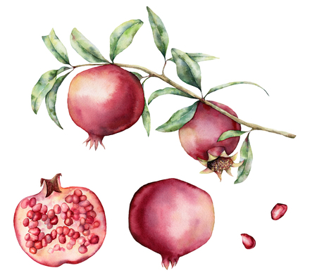 Watercolor pomegranate branch and slice set. Hand painted pomegranate fruit on branch with slice isolated on white background. Floral elegant illustration for design, print.