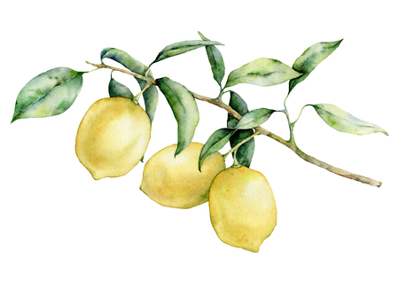 Watercolor lemon branch set. Hand painted lemon fruit on branch isolated on white background. Floral elegant illustration for design, print. Banco de Imagens