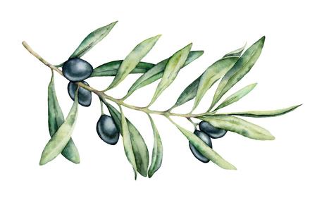 Aquarel zwarte olijftak set. Handgeschilderde bloemenillustratie met olijffruit en boomtakken met bladeren op een witte achtergrond. Voor ontwerp, print en stof.