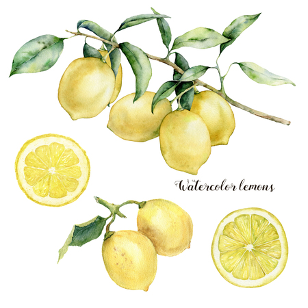 Watercolor lemon branch, lemons and slice set. Hand painted lemon fruit on branch with slice isolated on white background. Floral botanical illustration for design, print. Foto de archivo - 121767500