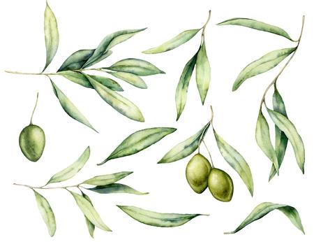 Aquarell grüne Olive, Blätter und Zweigsatz. Handgemalte Blumenillustration lokalisiert auf weißem Hintergrund für Design, Druck, Gewebe oder Hintergrund. Standard-Bild