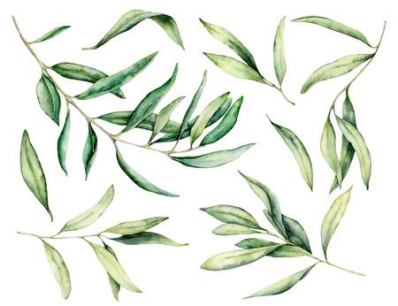 Aquarel olijftak en bladeren set. Handgeschilderde bloemen illustratie geïsoleerd op een witte achtergrond voor ontwerp, print, stof of achtergrond.