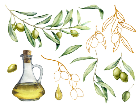 Watercolor and golden sketch set with olive, branch and bottle with oil. Hand painted illustration with berries and leaves isolated on white background. For design, print and fabric.