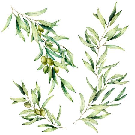 Watercolor olive tree branch set with leaves and green olives. Hand painted floral illustration isolated on white background for design, print, fabric or background. Banco de Imagens - 121767344