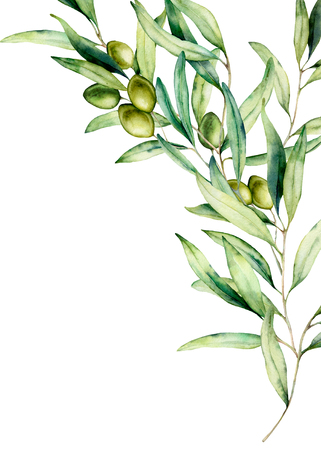 Watercolor olive branch card with green olives, leaves. Hand painted floral illustration isolated on white background for design, print, fabric or background.