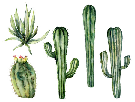 Watercolor mexican cacti set. Hand painted floral collection with desert cacti, agava. Botanical illustration isolated on white background for design, print, fabric or background. Stock Photo