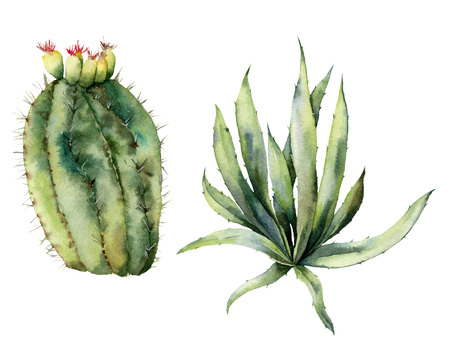 Watercolor set with mexican cacti. Hand painted floral collection with desert cactus, agava. Botanical illustration isolated on white background for design, print, fabric or background.