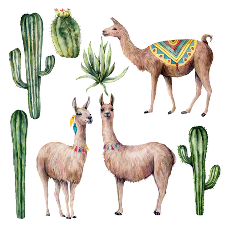 Watercolor card with llama and desert cacti. Hand painted traition botanical illustration with animal and floral on white background. For design, print, fabric or background.