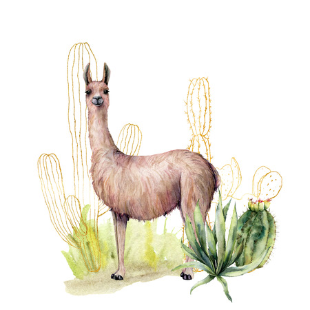 Watercolor card with cacti and llama. Hand painted floral illustration with desert cacti, lama, agava and grass isolated on white background. For design, print, fabric or background.