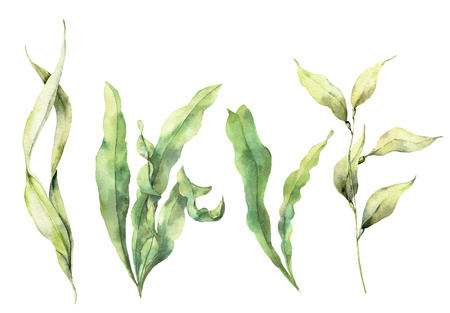 Watercolor set with laminaria. Hand painted underwater floral illustration with algae leaves branch isolated on white background. For design, fabric or print.