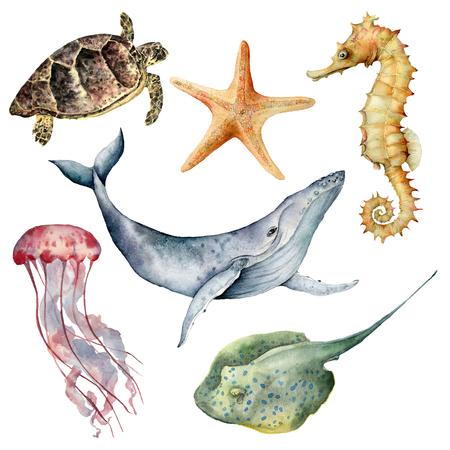 Aquarel onderwater dieren set. Handgeschilderde walvis, zeester, zeepaardje, pijlstaartrog, kwallen en schildpad geïsoleerd op een witte achtergrond. Aquatische illustratie voor ontwerp, print of achtergrond.