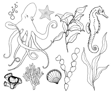 Vector sketch set with underwater wildlife. Hand painted octopus, seahorse, laminaria, starfish and shell isolated on white background. Aquatic line art illustration for design, print or background.