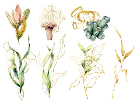 Aquarel set met laminaria en koralen. Handgeschilderde onderwater bloemen illustratie met algen bladeren en tropisch koraal geïsoleerd op een witte achtergrond. Voor ontwerp, stof of print. Stockfoto