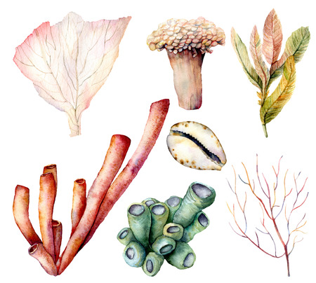 Watercolor coral set. Hand painted underwater elements isolated on white background. Aquatic illustration for design, print or background. Coral reef plants. Foto de archivo - 125236598