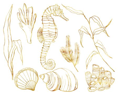 Watercolor line art underwater set. Hand painted seahorse, laminaria, corals and shell isolated on white background. Aquatic outline illustration for design, print or background. Beautiful wildlife. Stock Photo