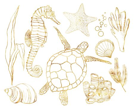 Watercolor golden set with underwater animals and coral reef plants. Hand painted turtle, seahorse, laminaria, coral and shell isolated on white background. Line art illustration for design, print.