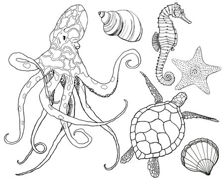 Line art set with octopus and underwater animals. Hand painted seahorse, turtle, starfish and shell isolated on white background. Aquatic outline illustration for design, print or background. Stock Photo